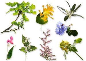tipologie fiori di bach